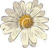 White and Yellow Daisy clipart