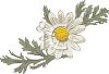 Daisy with Leaves clipart