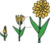 Stages of a Flower Growing clipart