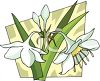 White Flowers Blooming clipart