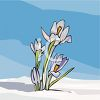 Crocus Growing Up Through the Snow clipart