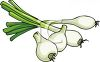Fresh Scallions clipart