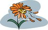 Wind Blowing the Petals Off a Daisy clipart
