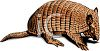 Common Armadillo clipart