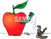 Boy and Girl Worms in an Apple clipart