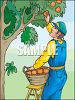 Man Picking Oranges clipart