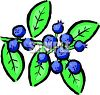 Growing Blueberries clipart