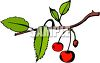 Cherries Growing on a Tree clipart
