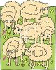 Herd of Cartoon Sheep clipart