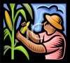 Farmer Picking Corn clipart