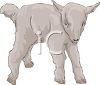 A Small Baby Goat clipart