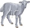 A Grey Baby Goat clipart