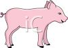Baby Piglet clipart