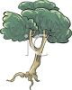 Tree with It's Roots Showing clipart