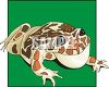 Bullfrog with Spots clipart