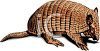 Realistic Armadillo with a Brown Hide clipart