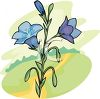 Bluebells Blooming In A Field clipart
