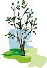 A Young Tree Getting Fresh Leaves clipart