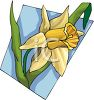 A Brightly Colored Daffodil clipart