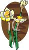 Blooming Daffodils clipart