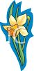 A Daffodil Blooming clipart