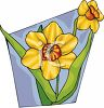 Daffodil Blooms clipart