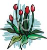 Tulip Buds clipart