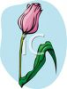 A Blossoming Tulip clipart