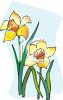 A Pair Of Daffodils clipart