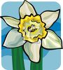 A Daffodil Bloom clipart