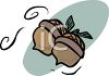 Two Acorns clipart