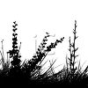 Black and White Silhouette of Leaves and Grasses clipart