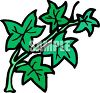 Cartoon Ivy Leaves clipart