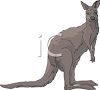 Kangaroo Looking Sideways clipart