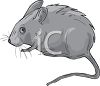 Gerbil or Mouse clipart
