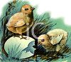 Furry Chicks Hatching clipart