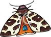 A Colorful Moth clipart
