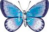 A Beautifully Colored Moth clipart