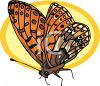 A Colorful Butterfly clipart