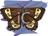 A Large Moth clipart
