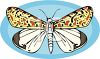 A Butterfly With Patterned Wings clipart