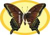 A Butterfly With Earth Toned Wings clipart
