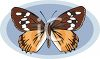A Butterfly With Scalloped Wings clipart