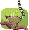 A Ring Tailed Lemur In A Tree clipart