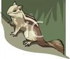 A Striped Chipmunk On A Tree clipart