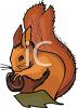 A Red Tree Squirrel Holding A Nut clipart
