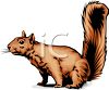 A Ground Squirrel clipart
