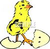 Chick Hatching From Egg clipart