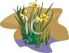A Daffodil Plant In Bloom clipart