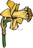 A Daffodil Flower Bloom clipart
